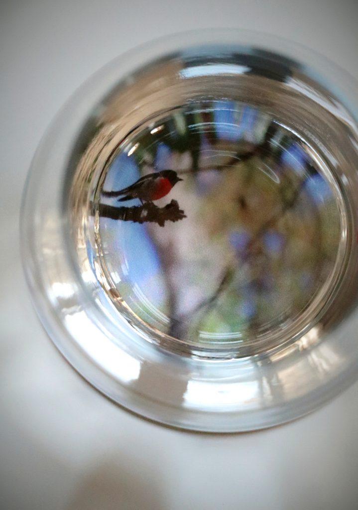 Detailansicht von oben auf Wasserglas und Untersetzer mit Vogel-Motiv